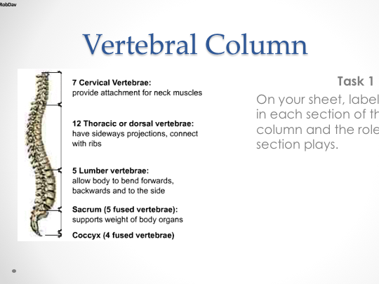 GCSE PE (Edexcel) - C1;T1.1.4 - Vertebral Column & Types Of Joints