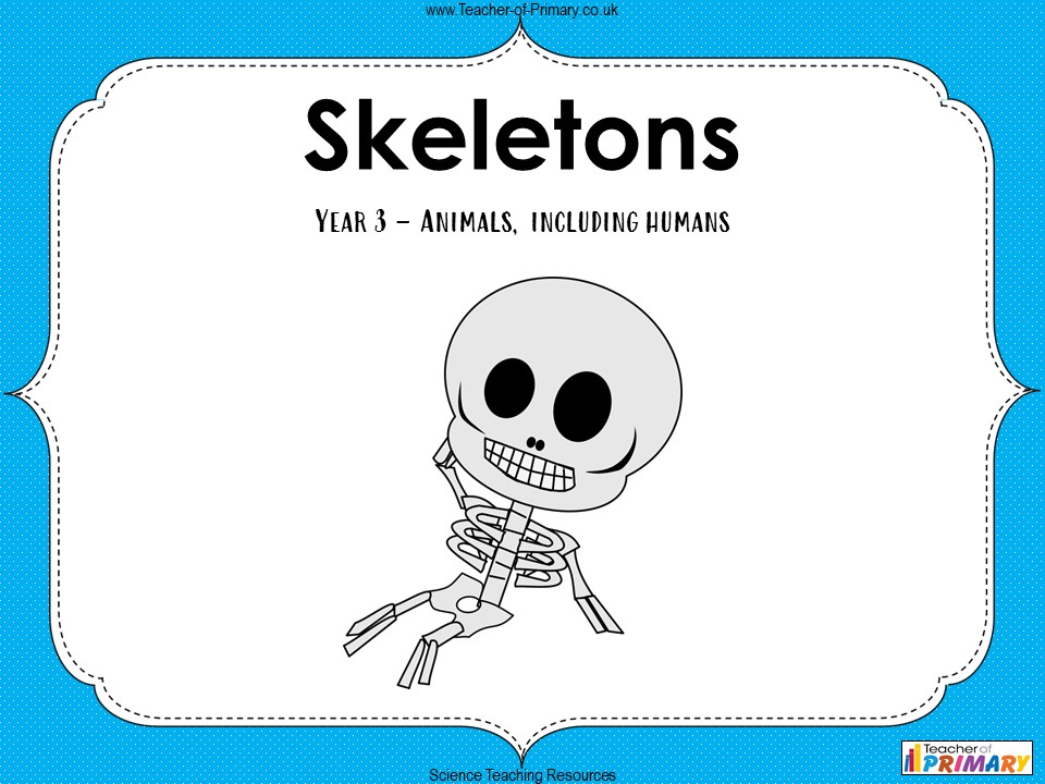 Skeletons - Year 3