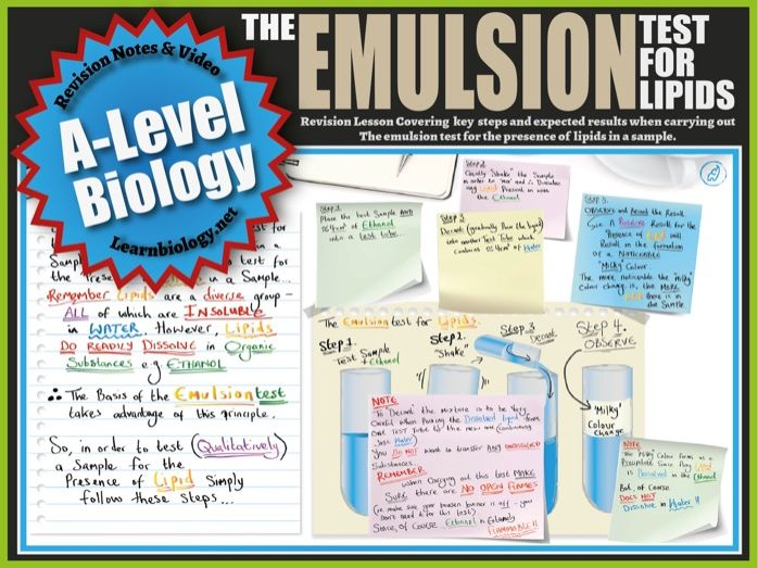 The Emulsion Test for Lipids (Food Tests) A-Level Biology Revision Notes and Worksheet