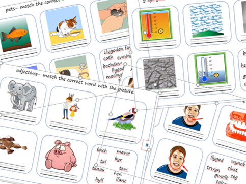 Picture activity cards - Learning Welsh bundle