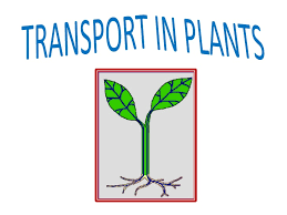 OCR A Level Biology - 3.3 Transport in Plants notes