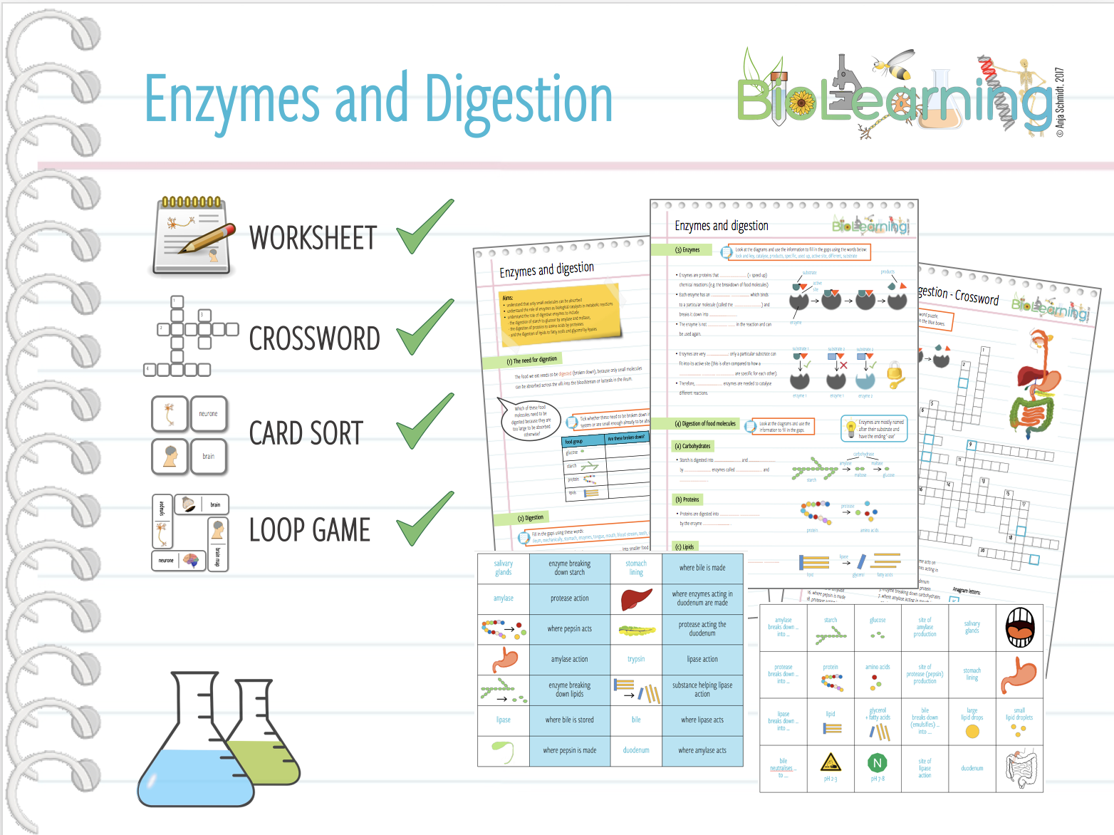 free download digestive enzymes worksheet. Black Bedroom Furniture Sets. Home Design Ideas