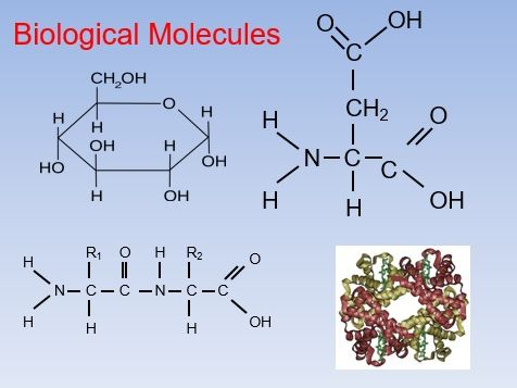 Biological molecules AS Biology
