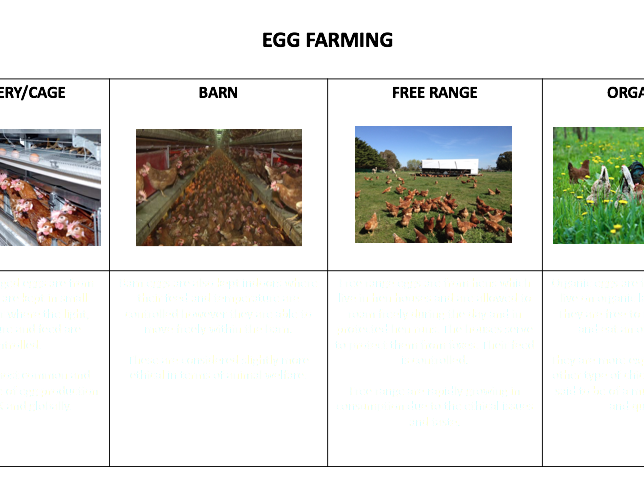Types of Egg Farming Conventional and Sustainable Methods Food & Nutrition Activity