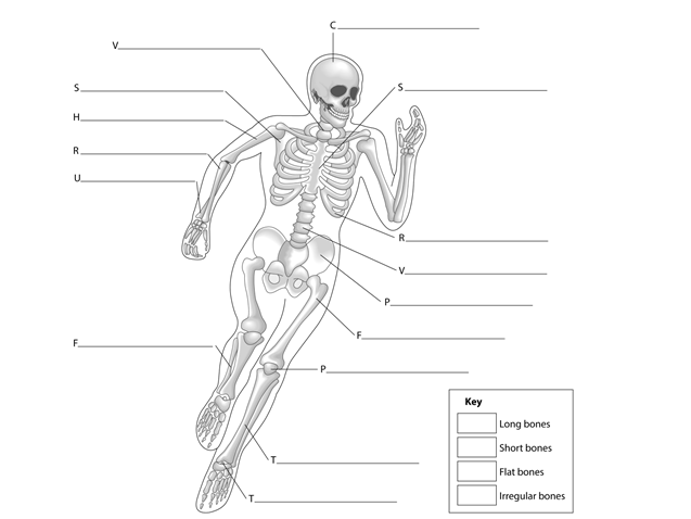 GCSE PE - Anatomy + Physiology Worksheets