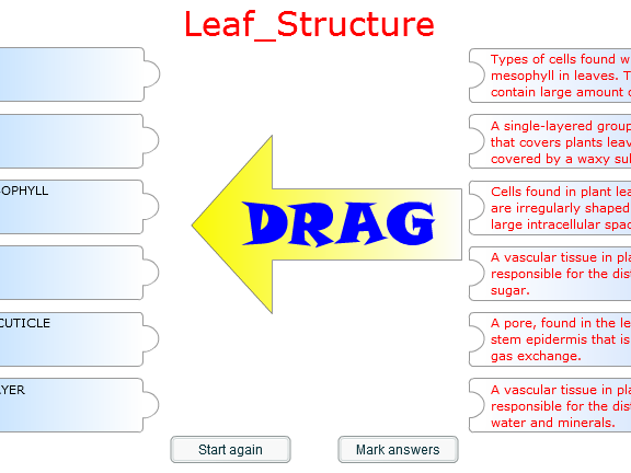 Fun Starter or Plenary Game involving Leaf Structure.