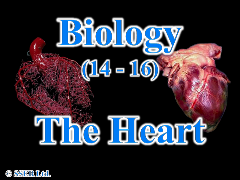 2.7 The Heart | Teaching Resources