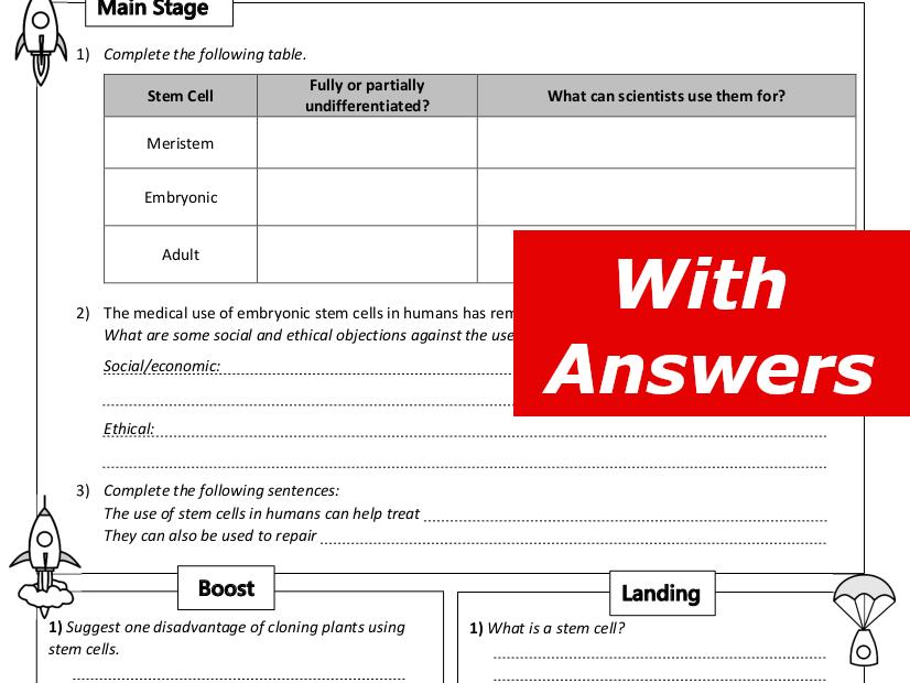 Stem Cells Home Learning Worksheet GCSE