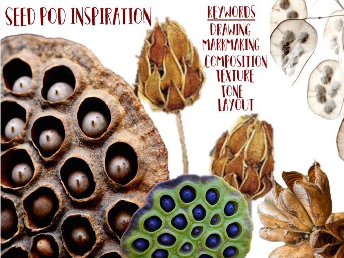 Natural From / Seed Pod Drawing Resource Sheet