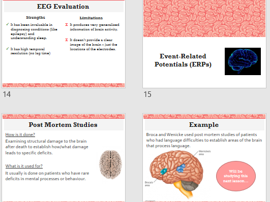 INVESTIGATING THE BRAIN  - Full Lesson (ppt & activities) - AQA Psychology Biopsychology Year 2