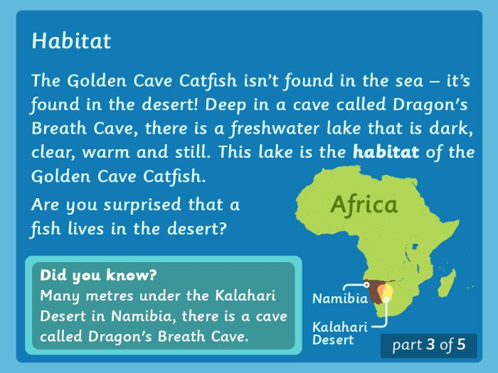 Y3/4 Reading Comprehension: The Desert Fish