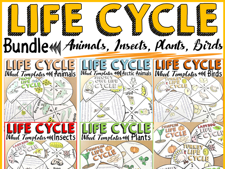 LIFE CYCLE CRAFT ACTIVITIES BUNDLE: ANIMALS; PLANTS; INSECTS; BIRDS