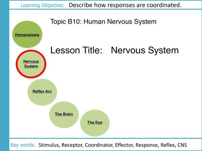 AQA GCSE: B10 The Human Nervous System: L2 The Nervous System