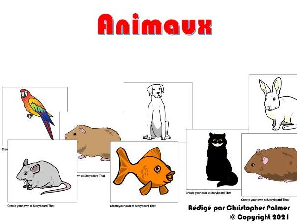 Key Stage 3 French: Pets and animals