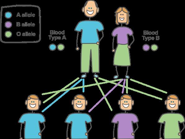 IB Psychology Genetics and Behaviour