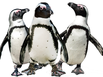Be prepared! 20th Jan 2017 is Penguin Awareness Day! Fun, ready to use, activity and quiz.