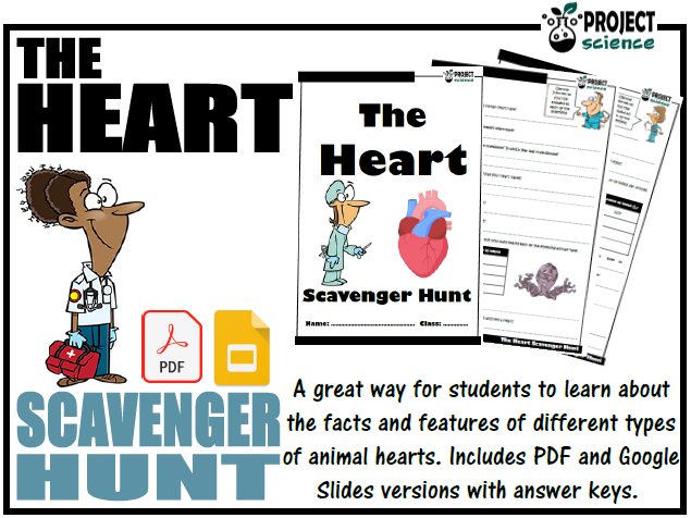 The Heart Scavenger Hunt - Distance Learning