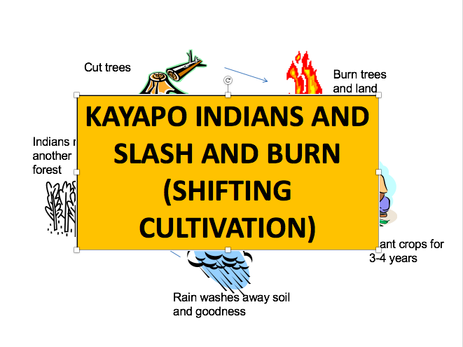 Kayapo Indians and Shifting Cultivation! Ecosystems