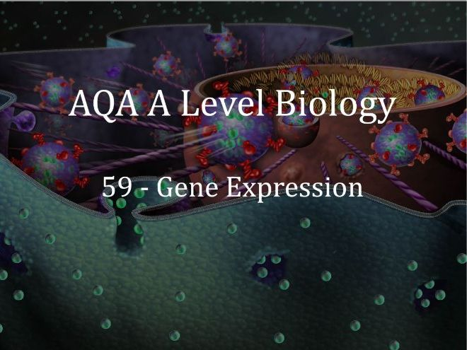 AQA A Level Biology Lecture 59 - Gene Expression