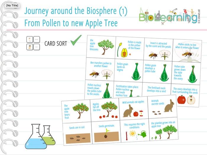 Journey around the biosphere (1): from pollen to new apple tree - Card sort (KS3/KS4)