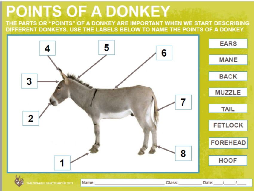 The Donkey Sanctuary Visit Guide Ks1 2 By