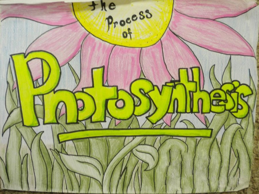 Photosynthesis A level Biology Notes