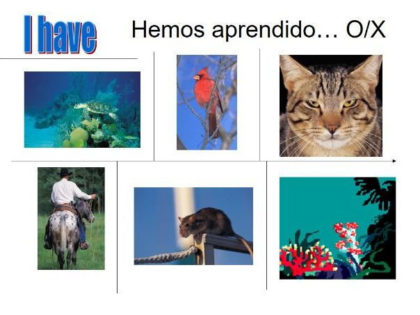 KS3 Spanish Pets, Colours and Description Bundle - 8 resources