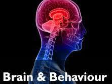 IB Psychology The Brain and Behaviour