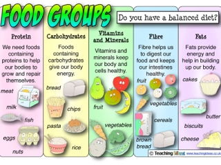 Science: Animals including Humans - Food Groups Lesson
