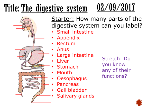 The human digestive system - complete lesson (GCSE 1-9)