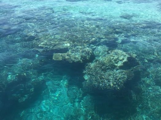 The Great Barrier Reef Lesson plan and Resources