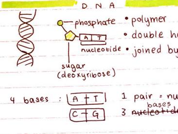 GCSE EDEXCEL UNIT 3 GENETICS SUMMARY