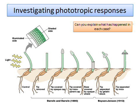 OCR 5.1.5 Plant and animal responses  A level Biology (approx 11 lessons)