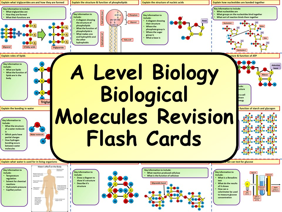 A Level Biology Biological Molecules Revision Flash Cards