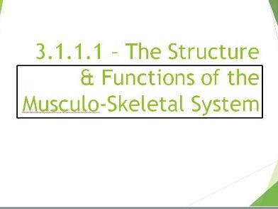 AQA New GCSE PE. Musculo-Skeletal System PowerPoint Presentation.