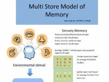Multi Store Model of Memory - A Lesson that should follow the teaching of this theory.