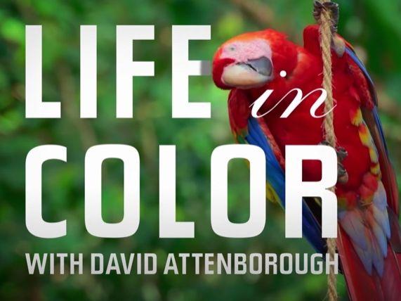 "David Attenborough's ""Life in Colour"" (Episode 1) Worksheet"