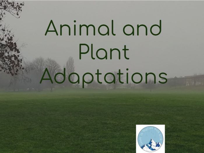 PLANTS AND ANIMALS ADAPTATIONS full lesson