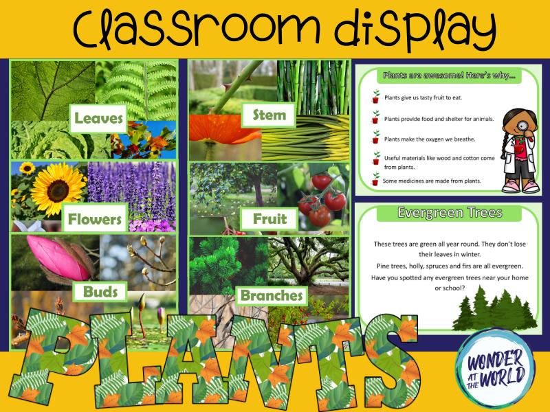 Plants classroom display pack KS1