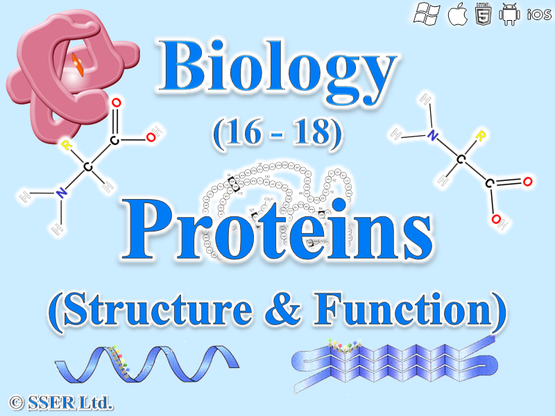 3.1.4.1 The Nature of Proteins (Structure & Function)