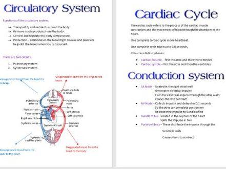 Cardiovascular System Booklet AS PE OCR
