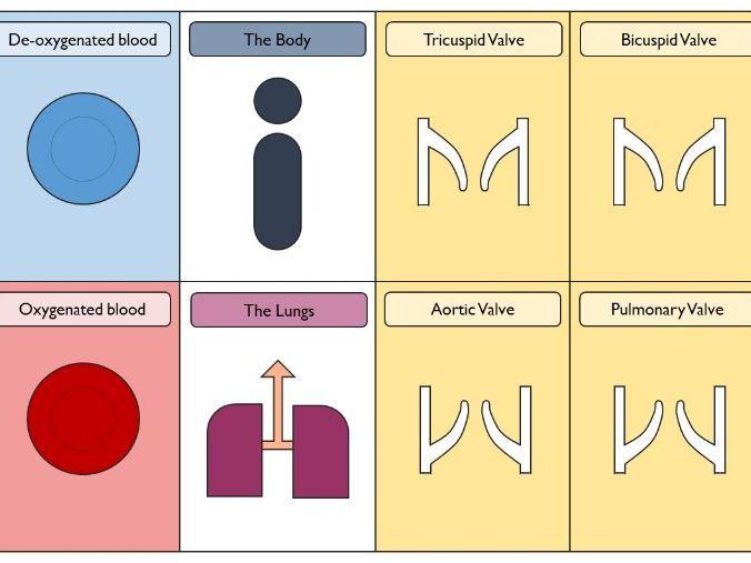 Heart Loop Cards
