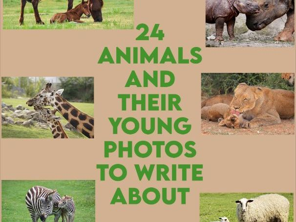 24 Animals and their Young Photos to Write about