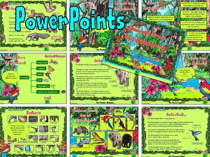 The Rainforest – PowerPoints