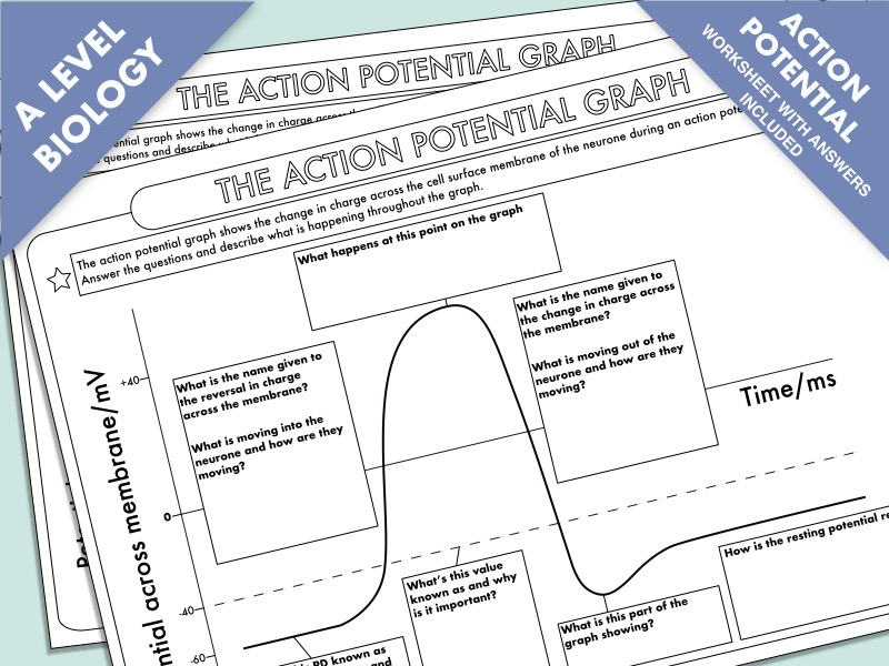 A Level Biology: The Action Potential