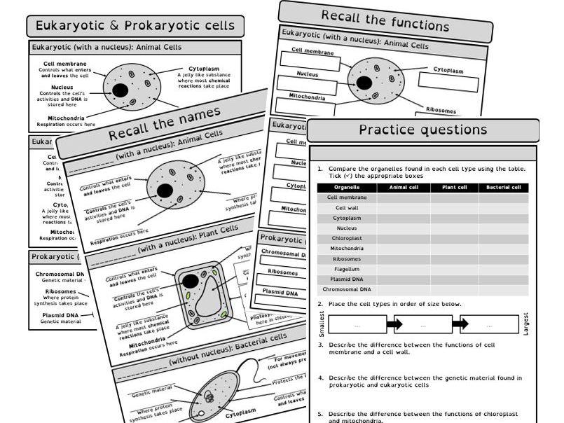 AQA Cells revision