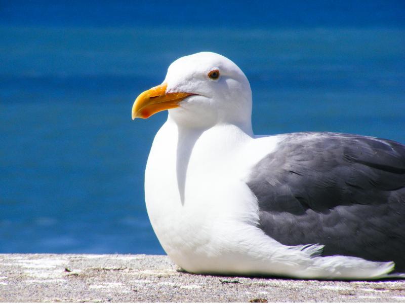 Explaining mindfulness: The Hungry Seagull