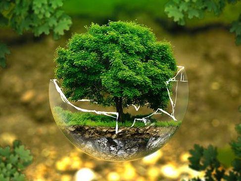 NEW AQA Trilogy Biology 4.4.2 Bioenergetics (Respiration) Lesson Bundle