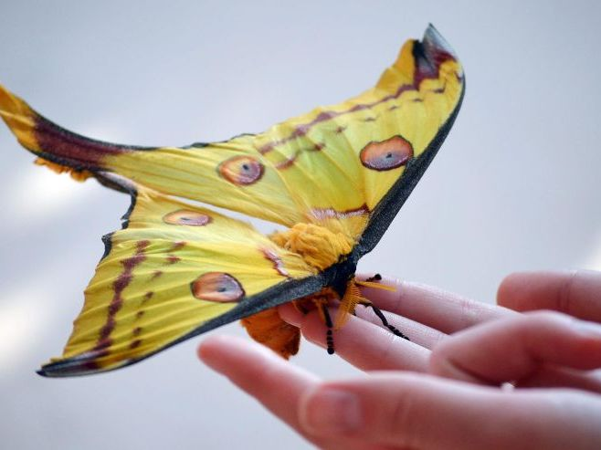 Reading comprehension: The Comet Moth