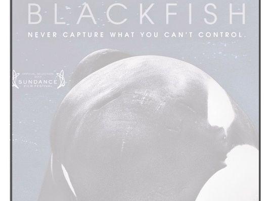 Listening Comprehension - Blackfish
